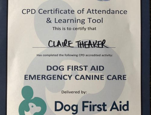 Newly Trained in Dog First Aid